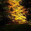 Westonbirt Arboretum-29