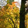 Westonbirt Arboretum-22