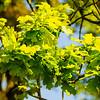 Westonbirt Arboretum-14