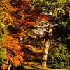 Westonbirt Arboretum-31