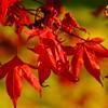 Westonbirt Arboretum-32