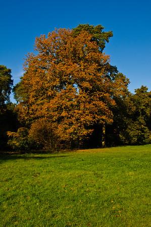 Westonbirt Arboretum-12