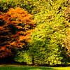 Westonbirt Arboretum-25