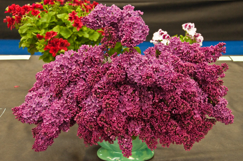 2010-May-08-Malvern spring flower show-10