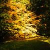 Westonbirt Arboretum-30
