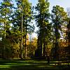 Westonbirt Arboretum-18
