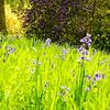 Westonbirt Arboretum-21