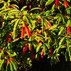 Westonbirt Arboretum-33