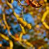Westonbirt Arboretum-16