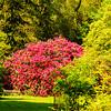 Westonbirt Arboretum-36