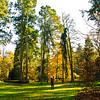 Westonbirt Arboretum-19
