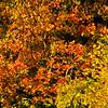 Westonbirt Arboretum-13