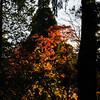 Westonbirt Arboretum-24