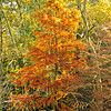 Westonbirt Arboretum-59