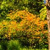 Westonbirt Arboretum-35