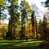 Westonbirt Arboretum-20