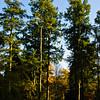 Westonbirt Arboretum-17