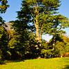 Westonbirt Arboretum-15