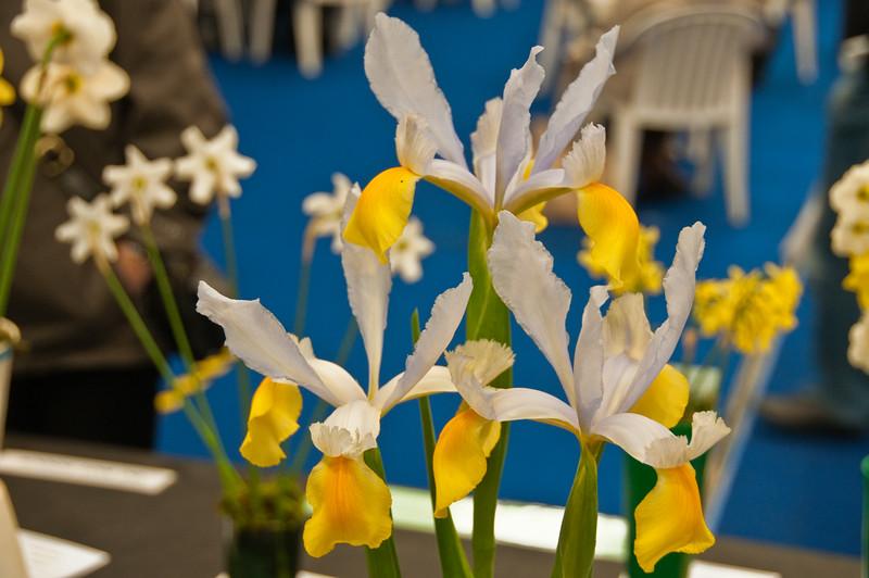 2010-May-08-Malvern spring flower show-9