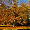 Westonbirt Arboretum-28