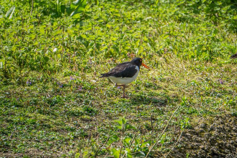 At Slimbridge Wetland Centre