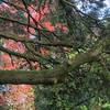 University botanic garden-8-Edit