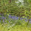 University botanic garden-7-Edit