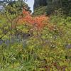 University botanic garden-2-Edit