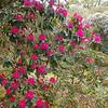 University botanic garden-5-Edit