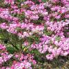 University botanic garden-9-Edit