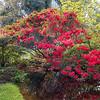University botanic garden-6-Edit