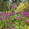 University botanic garden-4-Edit