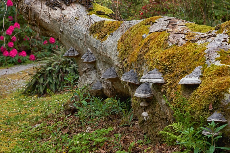 Leckmelm Gardens, near Ullapool