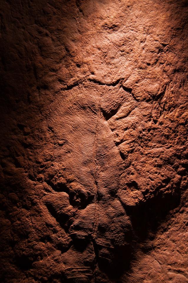 Ediacarian Fossil