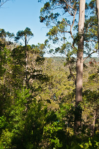 View from Warren Lookout
