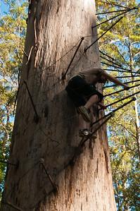 Climbing the Bicentennial Tree