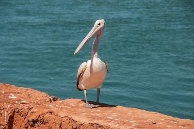 Pelican at Cossack wharf