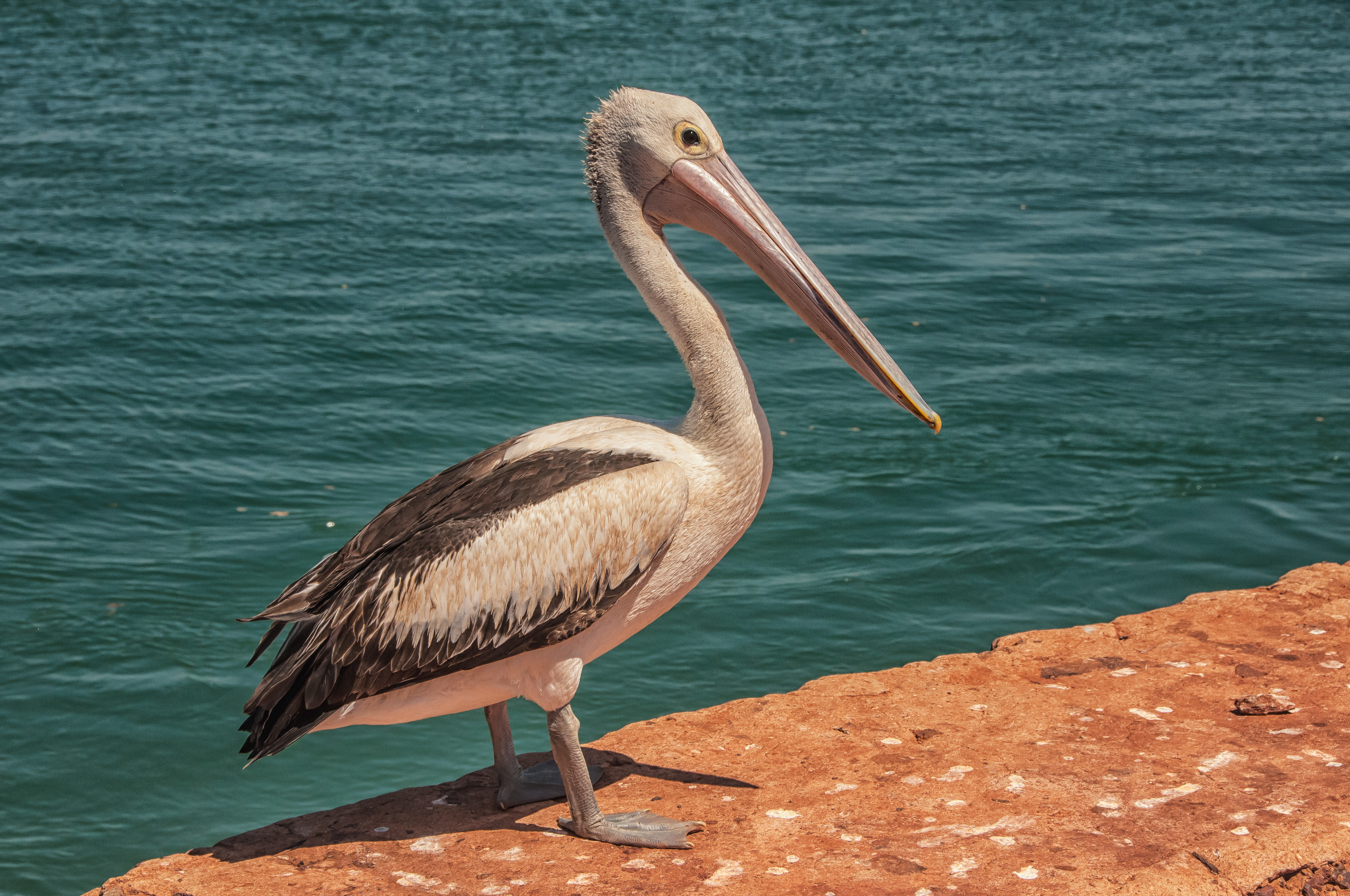 Pelican at Cossack wharf