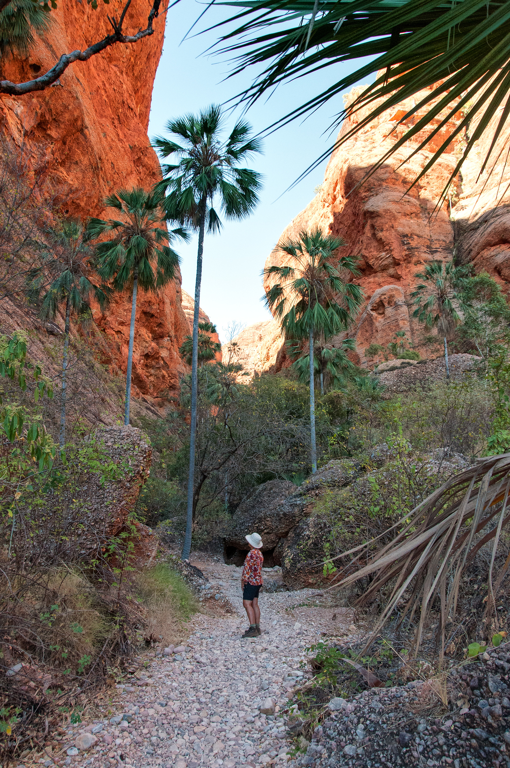 The Mini Palms Trail