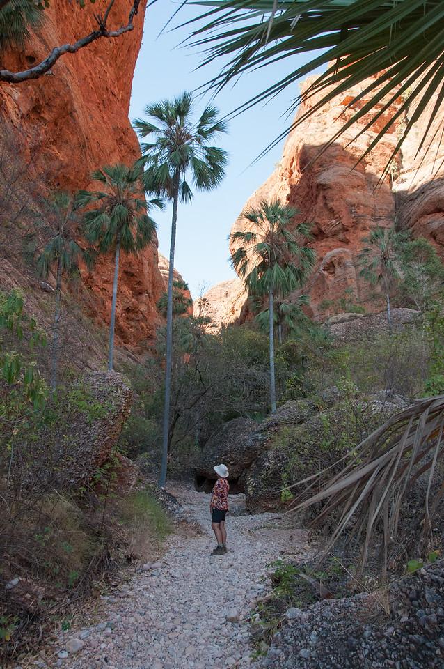 The Mini Palms Trail