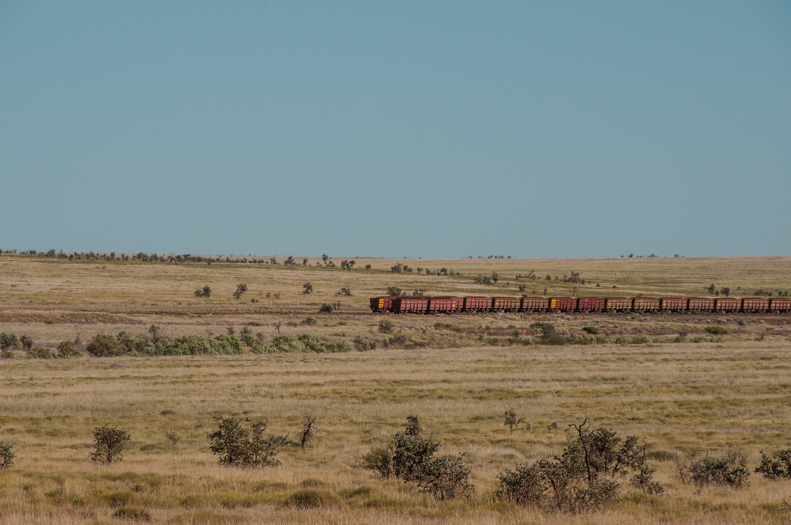 Train in the bush