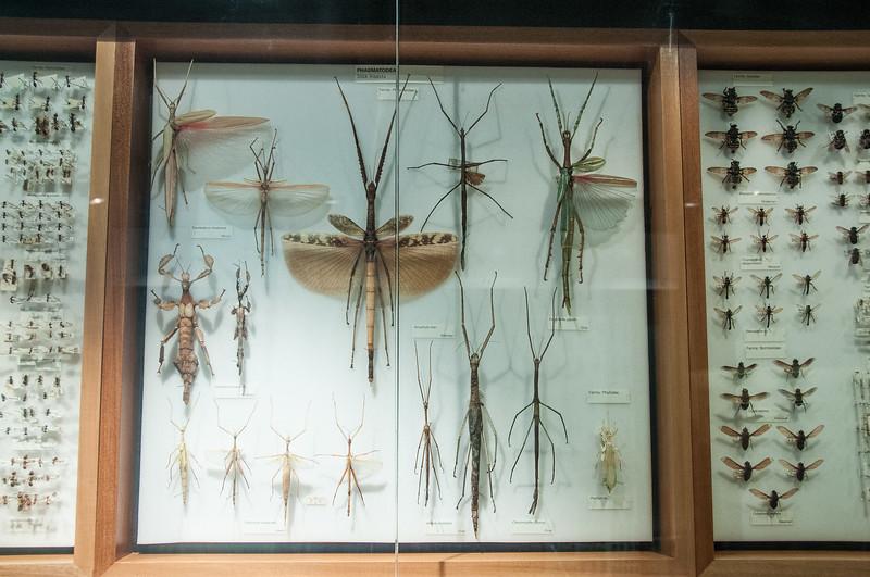 In Melbourne Museum