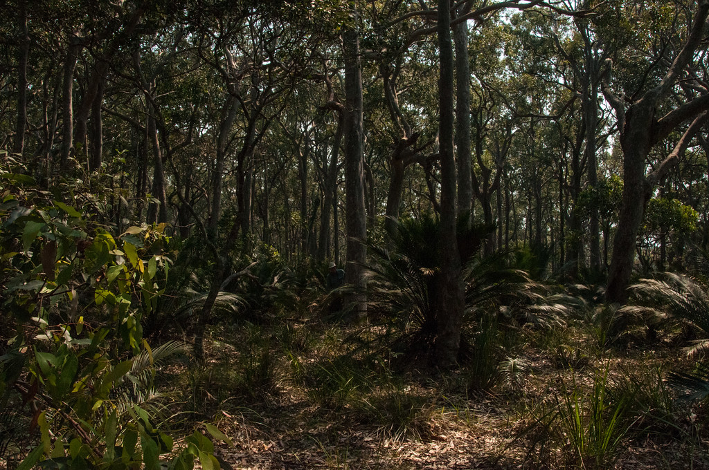 In the woods near South Durras