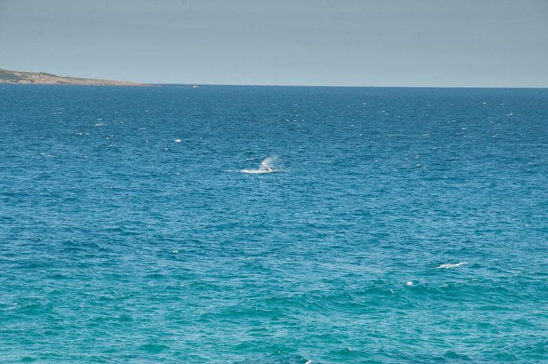 Is it a Whale?