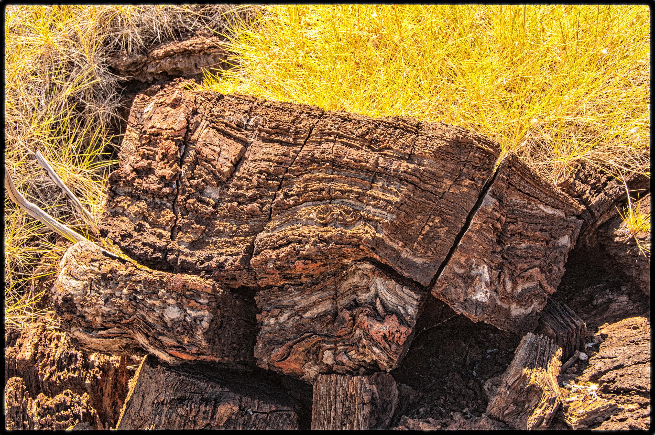 Stromatolitic limestone