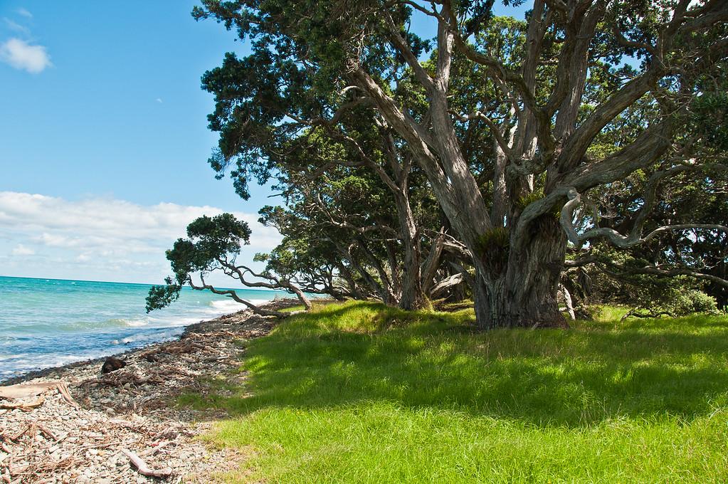 Coromandel to Fletcher's Bay (20 of 37)
