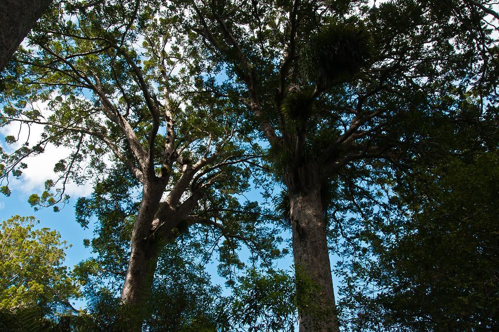 Coromandel to Opiko Bay (11 of 33)
