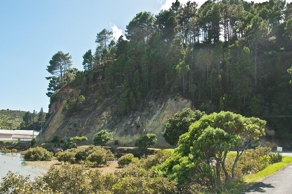 Coromandel to Fletcher's Bay (4 of 37)