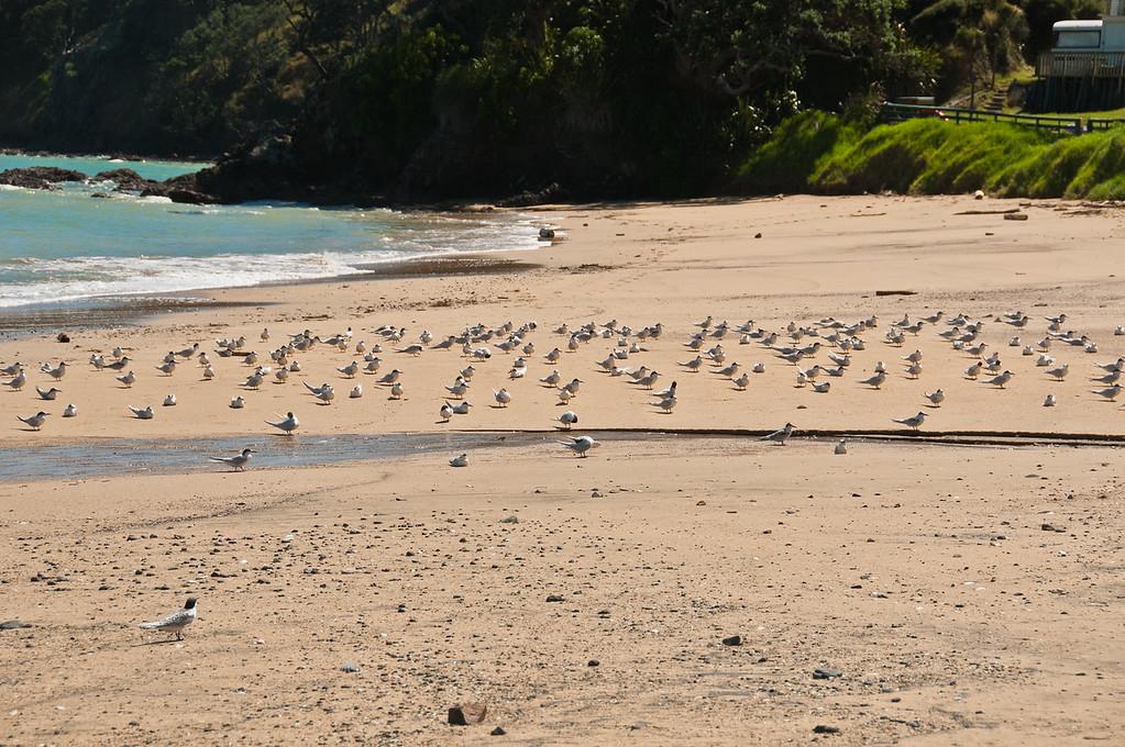 Coromandel to Fletcher's Bay (10 of 37)