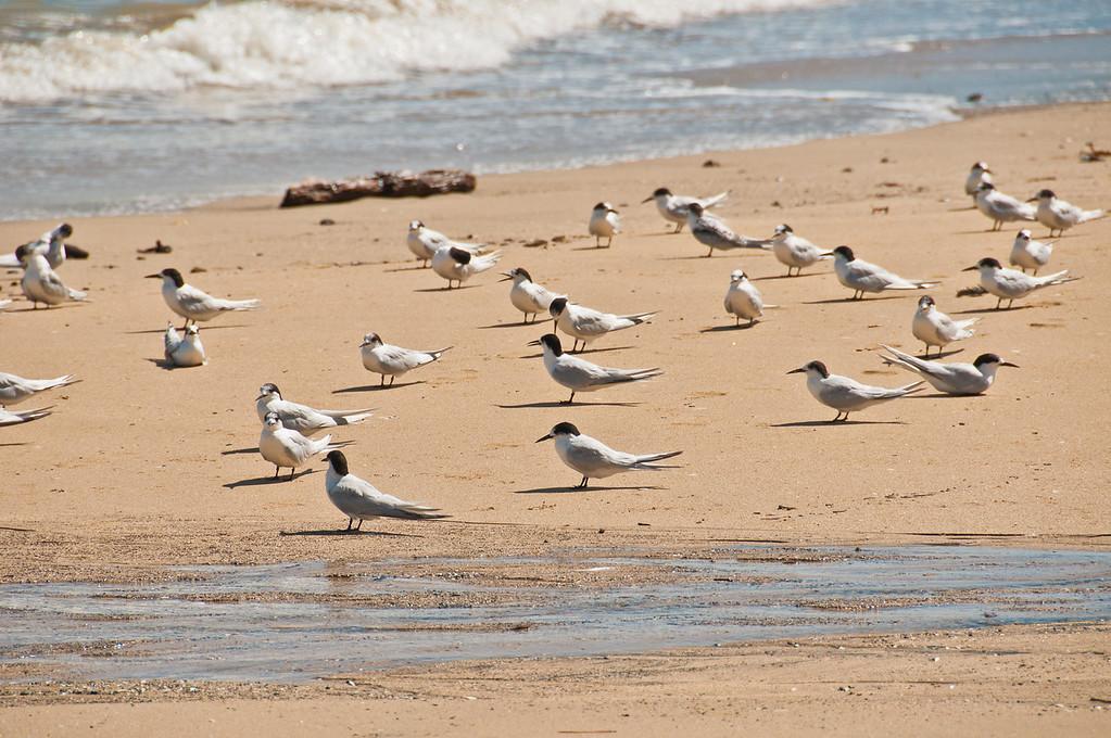 Coromandel to Fletcher's Bay (11 of 37)
